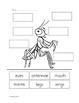Praying Mantis Life Cycles Language Arts & Science Unit