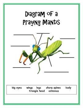 Praying Mantis Nonfiction Text and Response Activities