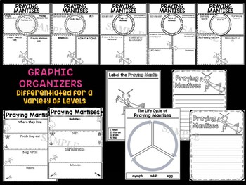 Praying Mantises : Graphic Organizers and Writing Craft Set : Insects and Bugs