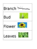 Pre-K Plant Unit Vocabulary Words