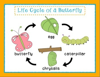 Pre-K/Kindergarten: Life Cycle of a Butterfly