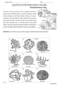 The Dichotomous Key of Corals with Guide How to Identify Marine Invertebrates