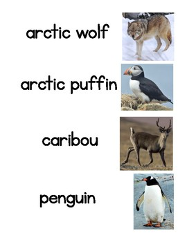 Arctic Animals Word Wall - Words First