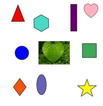"PreK Interactive SMART Board Lesson:""SHAPES IN NATURE"""