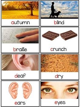NYCDOE PreK  My 5 Senses  Vocabulary Cards