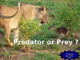 Predator or Prey?