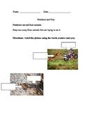 Predator vs Prey (living systems)