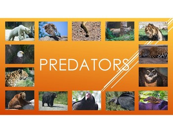 Predators-includes information about diet, habitat, attributes, and babies.