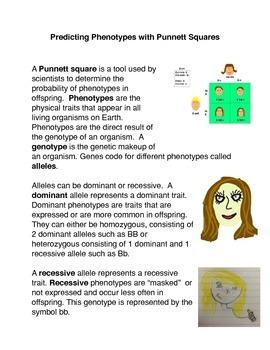 Predicting Phenotypes with Punnett Squares Common Core Activity