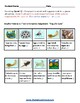 K - 2 Life Cycle of Frog- Speech and Language Challenges - Science