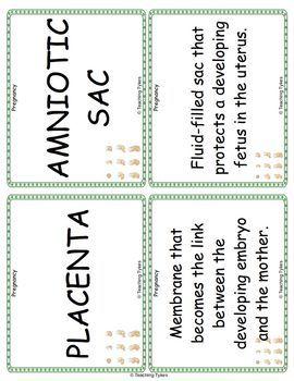 Pregnancy Vocabulary Cards