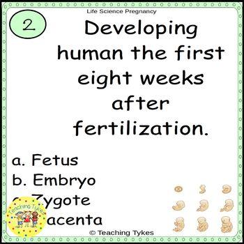 Pregnancy Task Cards