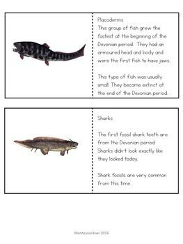 Paleozoic Era : Devonian Period