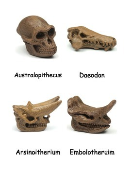 Prehistoric Mammal Skulls Nomenclature