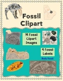 Fossil Clip Art: Prehistoric Plant & Animal Images and Labels NGSS