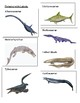 Prehistoric Sea Life 3 Part Cards - Timeline of Life