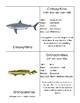 Prehistoric Sharks Definition Cards