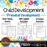Prenatal Development - Interactive Note-taking Activities