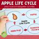 Preschool Apple Life Cycle Printable Activity Set