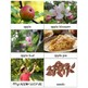 Preschool: Apple Theme Learning Pack