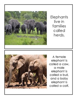 Preschool Elephant Book