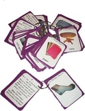 Preschool Flash Cards and Question Cards