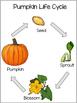 Preschool Kindergarten Pumpkin Science and Math Pack