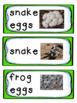 Thematic Literacy & Math Pack: Reptiles and Amphibians