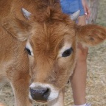 Preschool/Kinder Moves! Farm Unit