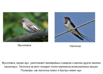 "Presentation in Russian language ""The bird's day"""