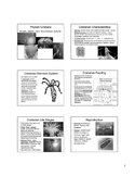Preview of Cnidarian Powerpoint Notes