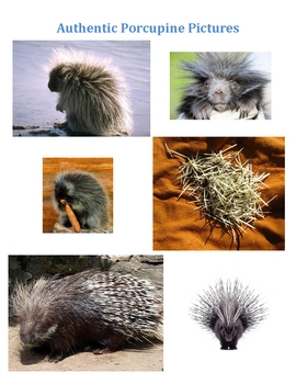 Prickly Porcupines (Number Sense Lesson) For Elementary