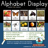 Alphabet Display for Your Classroom   Manuscript Alphabet Charts