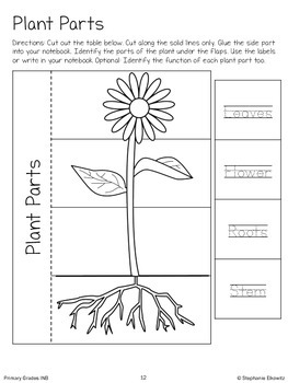 Life Science Interactive Notebook Activities (Primary Grades)