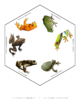 Primary Life Science: Review Spinner for Frogs