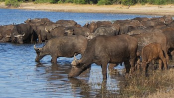 Primary & Secondary Sources - African Animals Theme-4 Parts