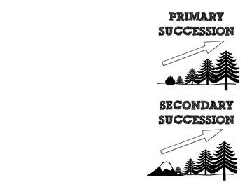 Primary and Secondary Succession Graphic Organizer