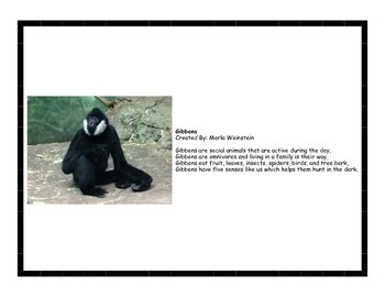 Primates Activity Pack