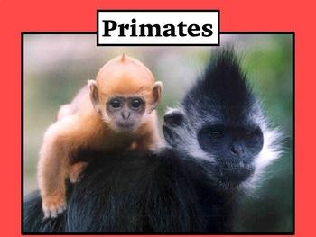 Primates Editable PowerPoint