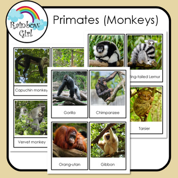 Primates (Monkeys)