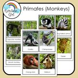 Primates (Monkeys)