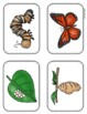 Print Packs - A Butterfly Grows - Lesson 24 Journeys Supplemental Resource