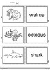 Printable Match Up 18 Water Animals - Hand Drawing - Ready to color and play