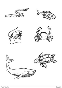 Printable 18 Water Animals for coloring - Hand Drawing