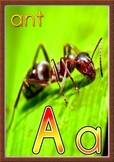 Printable Animals Alphabet Flash Cards and Poster