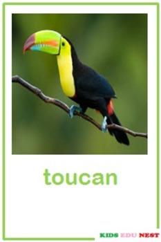 Printable Birds Flash Cards