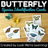 Butterfly Identification Cards - Beautiful Butterflies!