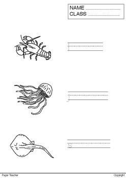 Printable Coloring and Writing Activity 18 Sea Animals - Hand Drawing