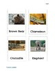 Zoo Animal Flashcards - Let's Go to the Zoo!