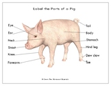 Printables: 2019 Year of the Pig ~ Label the Parts of a Pig